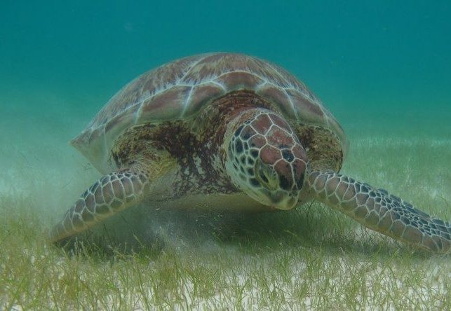 Akumal Turtle Stats